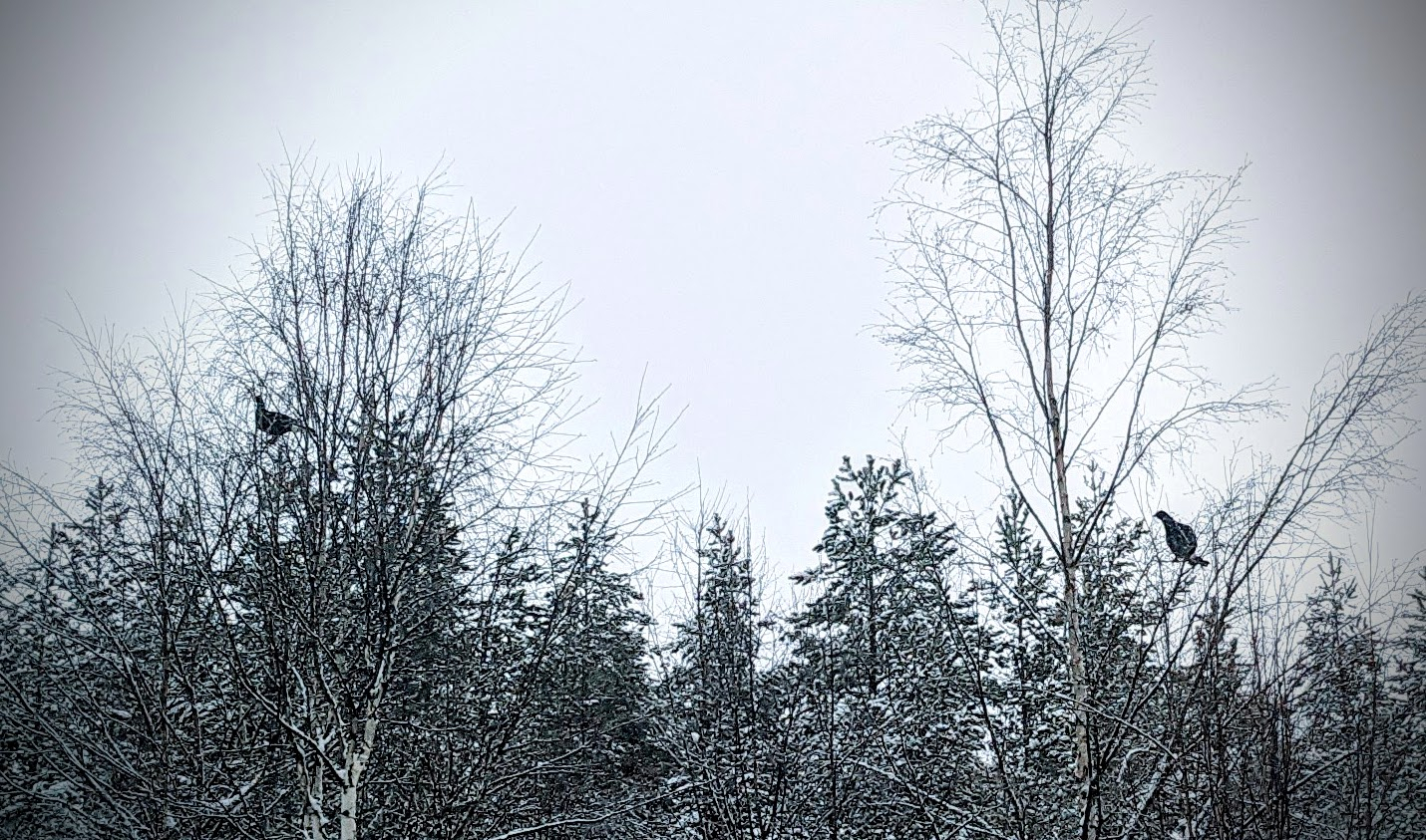 Teeret puussa tien varrella